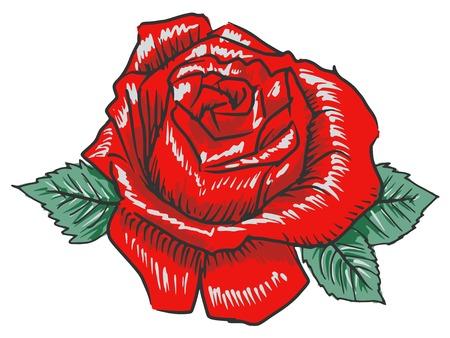 bovenaanzicht plant: hand getrokken, schets illustratie van roos