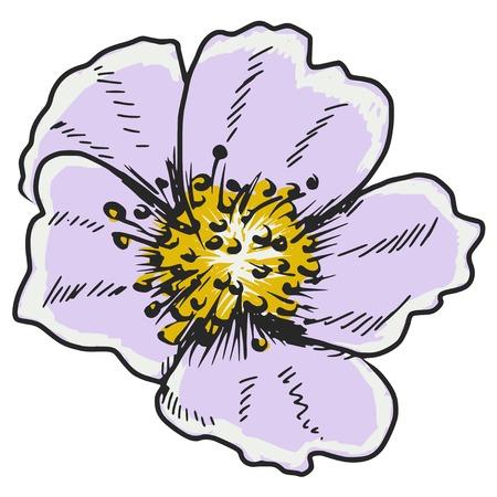 primrose: hand drawn, sketch, doodle illustration of primrose