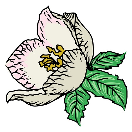 flamy: hand drawn, sketch, doodle illustration of spring flower