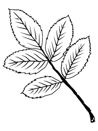 aging process: hand drawn, sketch, cartoon illustration of leaf Illustration