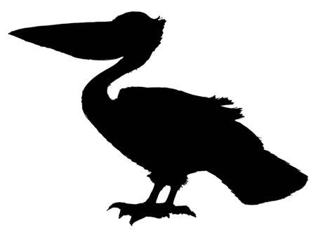pelican: black silhouette of pelican