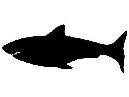 carcharodon: black silhouette of shark Illustration