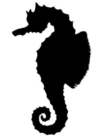 sea horse: black silhouette of sea horse
