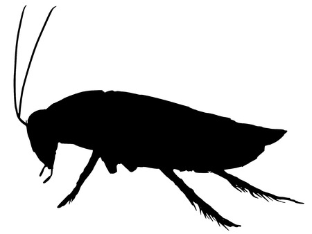 black silhouette of cockroach