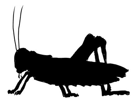 grasshopper: black silhouette of grasshopper