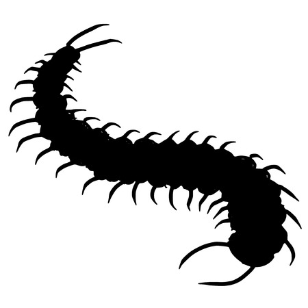 black silhouette of centipede