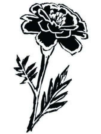 marigold: black silhouette of marigold