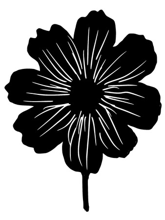 aster: black silhouette of cosmos aster