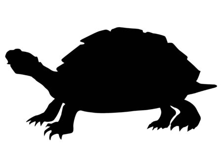 turtle isolated: silhouette of turtle