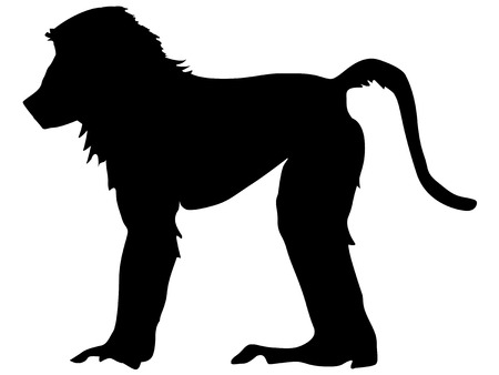 baboon: silhouette of baboon