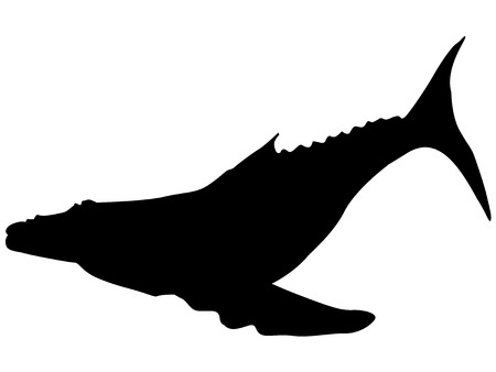 big fin: silhouette of whale