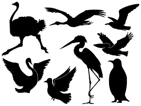set of silhouettes of different birds Illustration