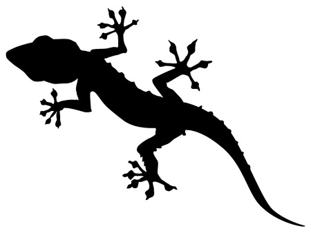 zoological: silhouette of gecko