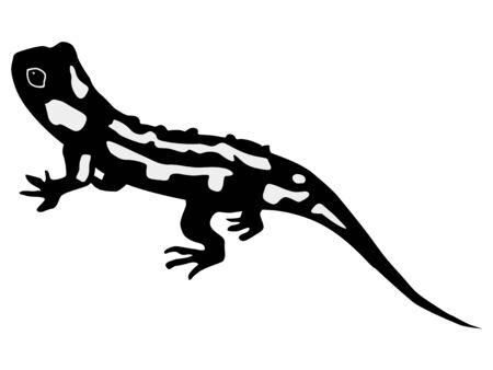 silueta de salamandra