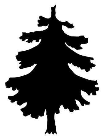 spruce: silhouette of spruce
