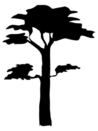 reforestation: silhouette of pine
