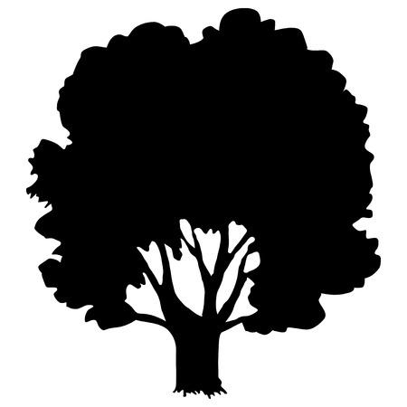 silhouette di quercia