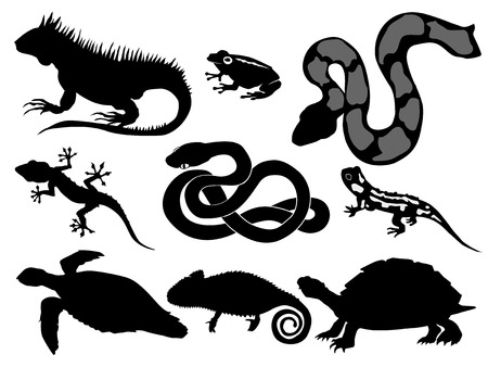 sea snake: set of silhouettes of reptiles