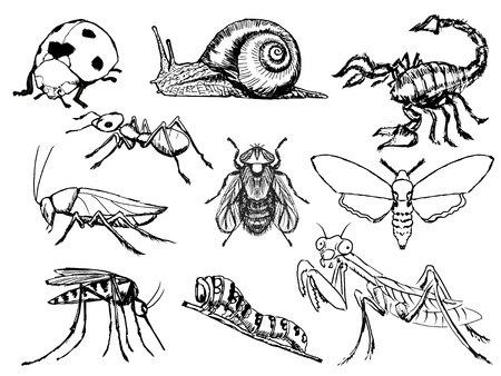 cartoon scorpion: set of sketch illustration of different insects