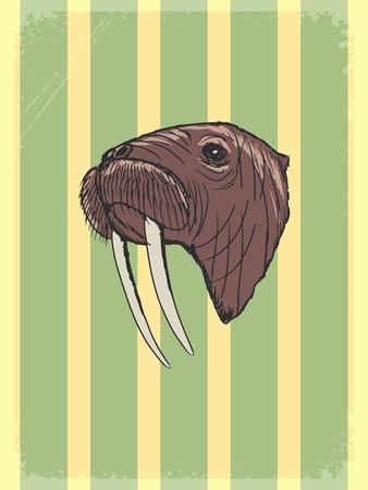 walrus: vintage, grunge background with walrus