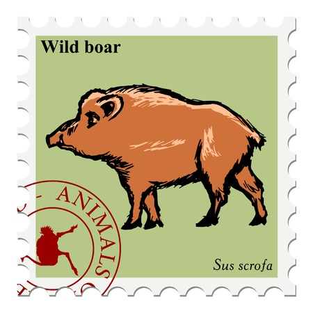wild boar: vector, post stamp with wild boar