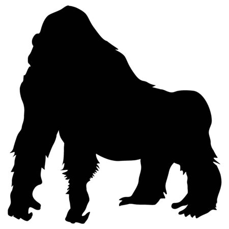 isolated animal: black silhouette of mountain gorilla