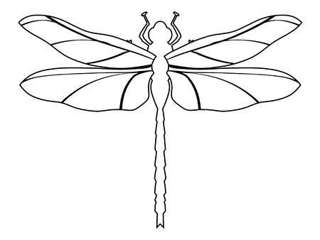 outline illustration of dragonfly, top view