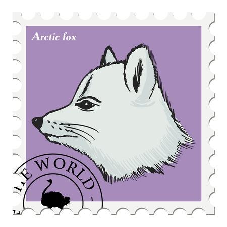 arctic: vector, post stamp with arctic fox Illustration