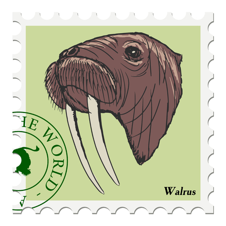 walrus: vector, post stamp with walrus
