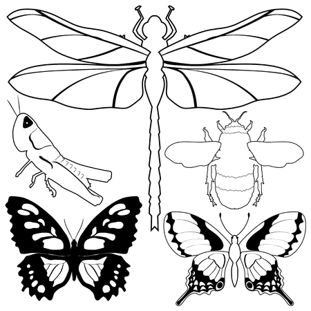 dragonfly wings: set of vector, outline illustrations of different insects