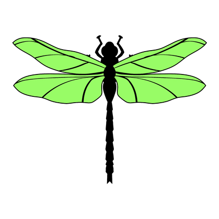macro nature: illustration of dragonfly, top view