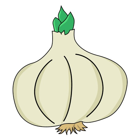 spice: illustration of garlic, spice food