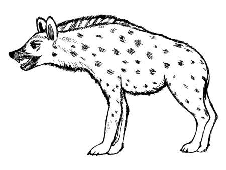 hienas: ilustración boceto dibujado a mano de la hiena, serie de la fauna