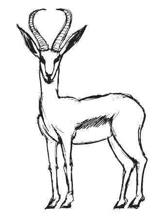 gazelle: hand drawn, grunge, sketch illustration of gazelle