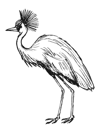 crowned: hand drawn, grunge, sketch illustration of African crowned crane