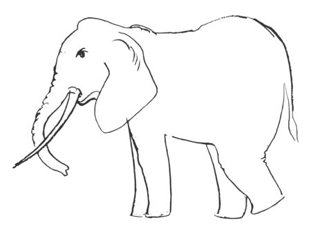 wildlife: elephant, illustration of wildlife, zoo, wildlife, animal of Africa, safari