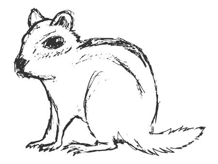 ardilla: ardilla, ilustraci�n de fauna, parque zool�gico, fauna, animal del bosque Vectores