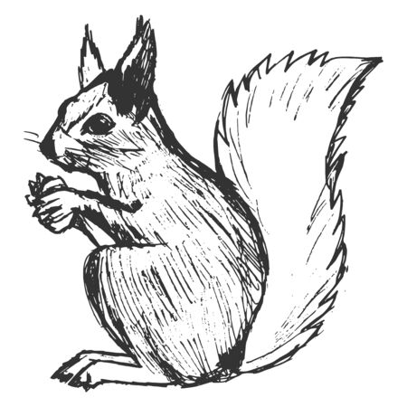 wildlife: squirrel, illustration of wildlife, zoo, wildlife, animal of forest