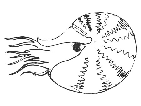 nautilus: nautilus, illustration of wildlife, zoo, wildlife, animal of sea Illustration