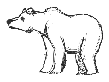 wildlife: bear, illustration of wildlife, zoo, wildlife, animal of forest