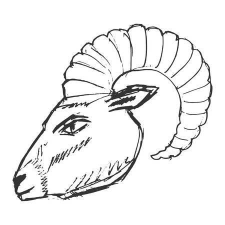 ibex ram: mountain goat, illustration of wildlife, zoo, wildlife, animal of mountain