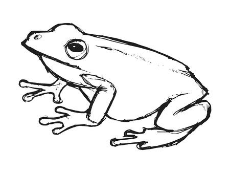 rana: rana de �rbol, ilustraci�n de fauna, parque zool�gico, fauna, animal de la selva tropical