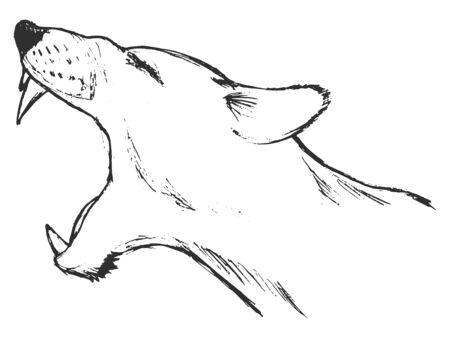 lioness: illustration of  lioness