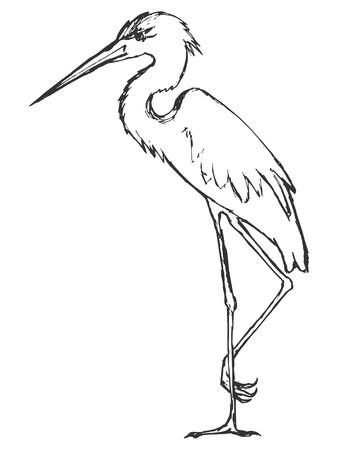 gray herons: illustration of heron