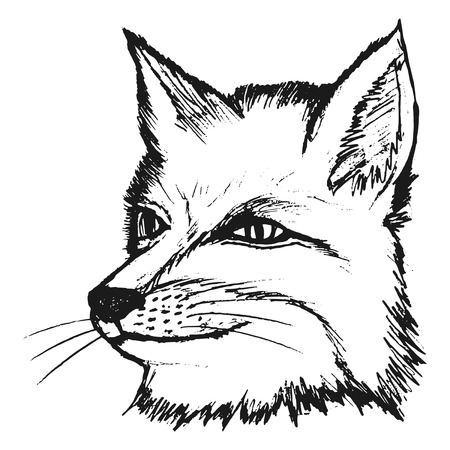 furry animals: illustration of fox Illustration