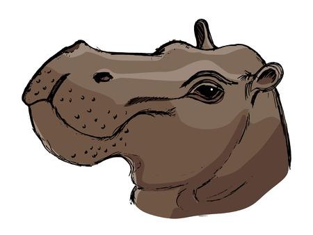 mammal: hippopotamus, illustration of wildlife, African, safari, zoo, mammal