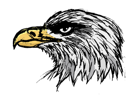 bold: bold eagle, illustration of wildlife, bird, zoo, symbol of USA Illustration