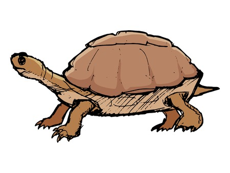 wildlife: turtle, illustration of wildlife, zoo, wildlife, reptile Illustration