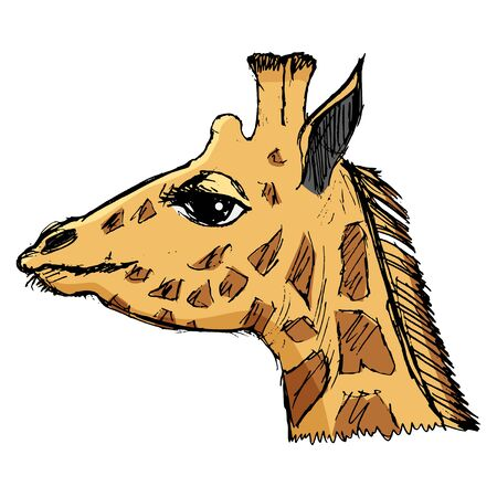 africa safari: giraffe, illustration of wildlife, zoo, wildlife, animal of Africa, safari