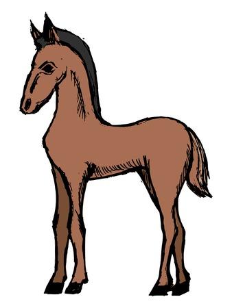 foal: foal, illustration animal of farm